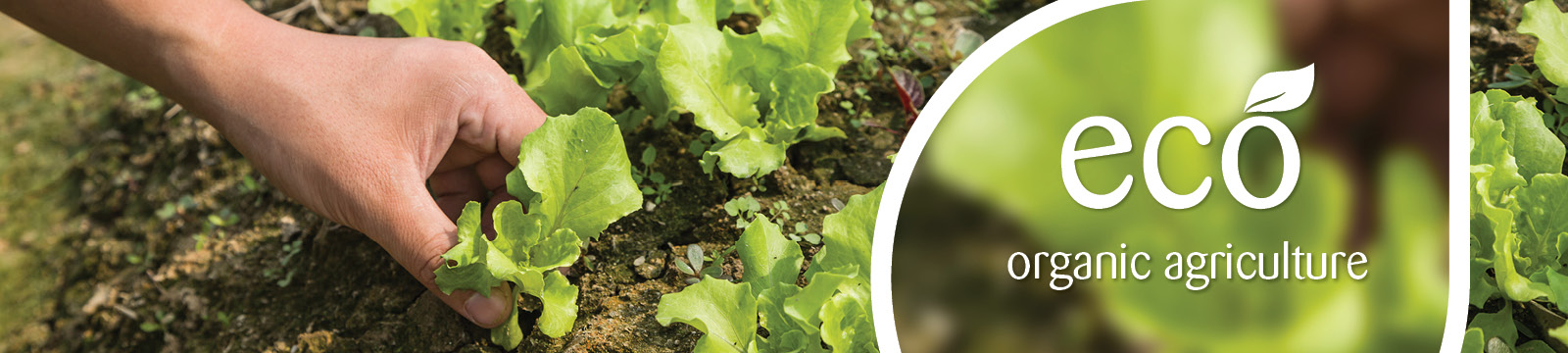 Ekologinis žemės ūkis